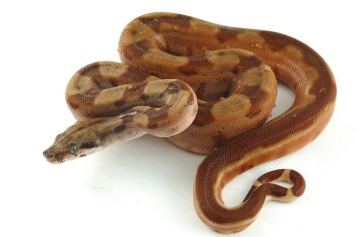 reptile-242637_1280